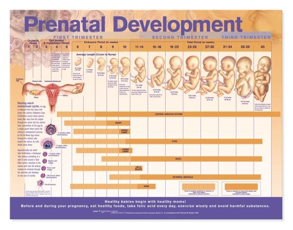 Development Diagram